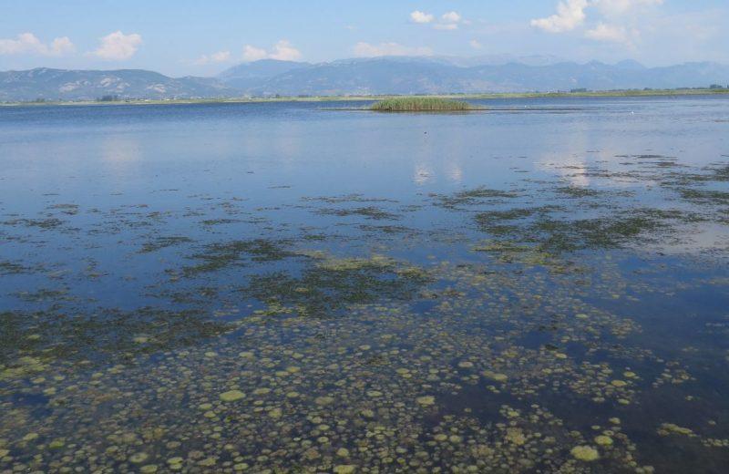 Die Lagune bei Lezhë, Albanien
